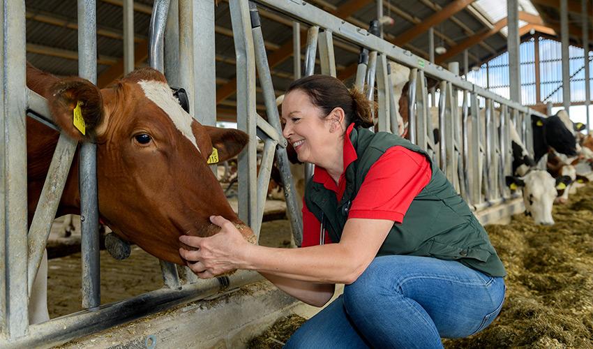 Berühmt Homöopathie für Rinder | Tierheilpraxis für Rinder Homöopathie #RF_96
